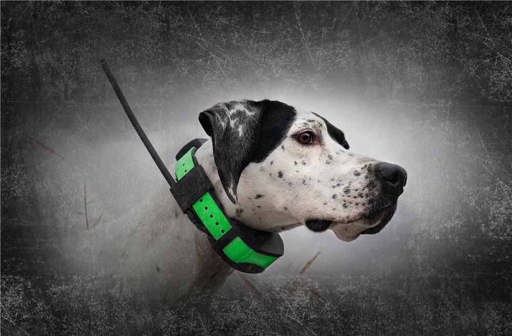 Sportdog Tek 1 5 Series Gps Location E Collar