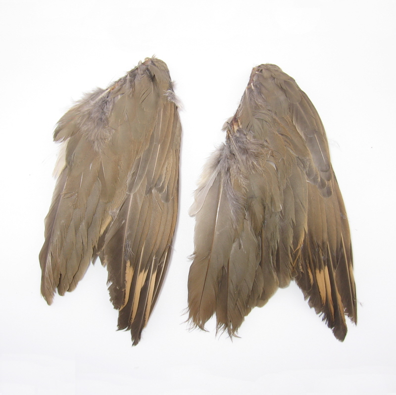 Grouse Wings For Dog Training