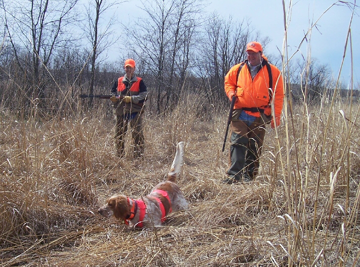 hunting and bird dog training gear