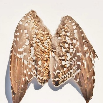 Classic T Wild Sharptail Grouse Wings, 2-pack